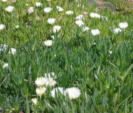 Fleurs de cadaquès